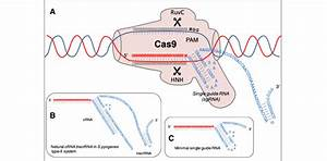 Cas9 Protein Scanning To Find Dna Sequence Complementary