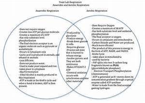 Anaerobic And Aerobic Respiration Venn Diagram