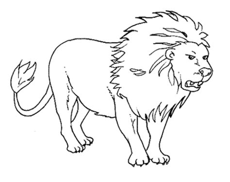 wild animals coloring pages  printable