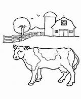 Coloring Cow Barn Milk Ox Pages Cattle Musk Carton Getcolorings Printable Netart sketch template