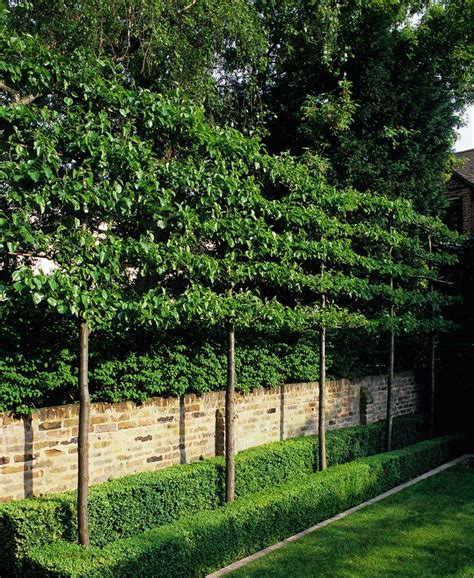 small trees for screening 551 best images about gardens on pinterest gardens window boxes and hedges