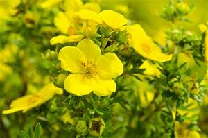 What Are The Benefits Of Evening Primrose Oil