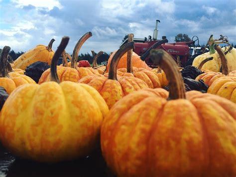 pumpkin patch county whatcom whatcomtalk pumpkins triple