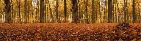 autumn forest panorama  stock photo public domain