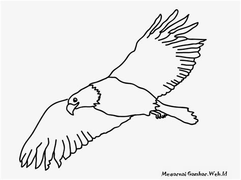 gambar mewarnai gambar burung hantu dewasa terbaru elang