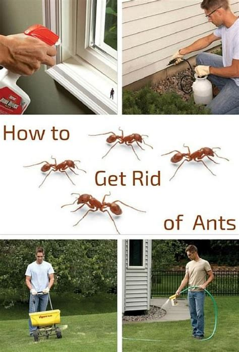 how to get rid of ants on patio plan 278 best images about the backyard garden on