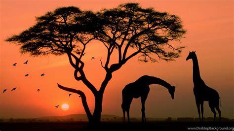 Giraffe In Africa 1920x1080 1080p Wallpapers Hd