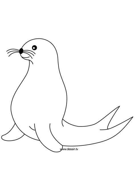 seal coloring pages   print