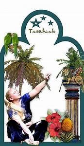 Figur Aus 1001 Nacht : tassimah ~ Eleganceandgraceweddings.com Haus und Dekorationen