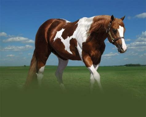 paint horse horses animals background wallpapers