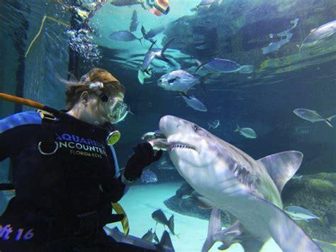 florida keys aquarium encounters floridaattractionscom