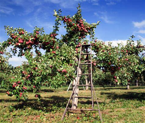 Garten Im Herbst Kalken by Rasen Kalken Im Herbst Rasenpflege Im Herbst So St Rken