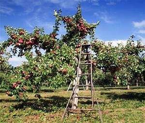 Apfelbaum Für Balkon : apfelbaum kalken wie warum macht man das ~ Michelbontemps.com Haus und Dekorationen