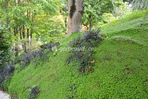 jardin en pente am 233 nagement plantes