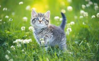 pictures of cats kittens in grass wallpapers pics gallery