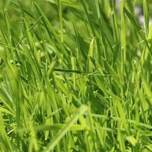 Traitement Mauvaise Herbe : traitement de pelouse ~ Melissatoandfro.com Idées de Décoration