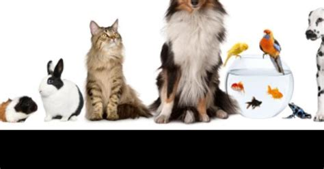 pat les animaux de compagnie la taxe sur les animaux de compagnie effective d 232 s janvier 2016
