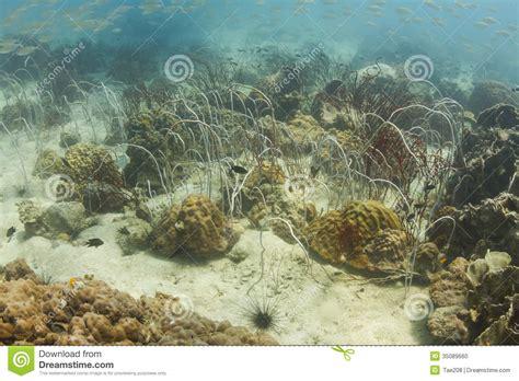 Underwater Marine Life In Kood Island Stock Photo Image