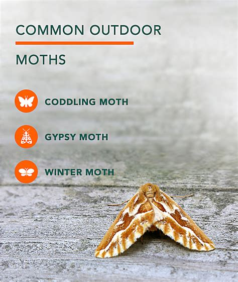 attractive how to to get rid of moths in your closet