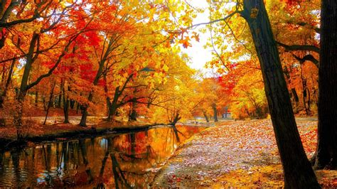 Fall Leaves Wallpaper Hd (62+ Images