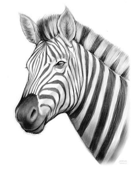 Zebra By Greg Joens Artwantedcom
