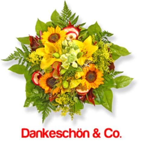 kokoserde für welche pflanzen rankpflanze snaily dischidia pectenoides urnenpflanze p425 blumenversand pflanzen shop