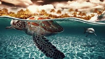 Shark Turtle Sea Wallpapers Seaturtle Turtles Hq