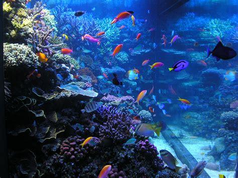 bay windows monterey bay aquarium trivia the enchanted manor