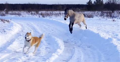 horse   dog bff running   snow