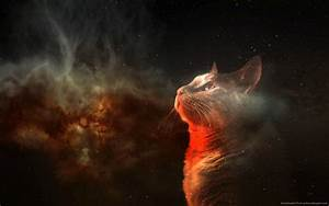Free Space Cat Wallpapers Images « Long Wallpapers