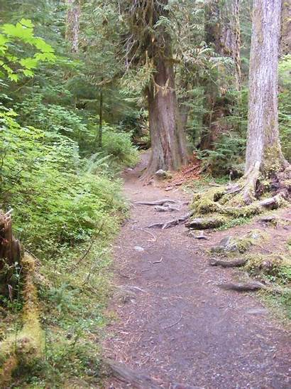 Staircase Olympic National Park Trail Rapids