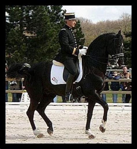 amis du cadre noir mes amis les chevaux 11 09 11