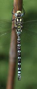 21 Best Butterfly  Dragonfly  Bees Images On Pinterest