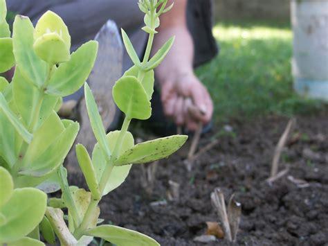 plante interieur et exterieur amendement de sol pepinierelelann deco accessoire vente d arbustes plantes vertes en pot et
