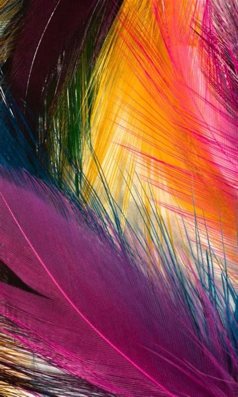 cool color feathers cell phone wallpapers  hd