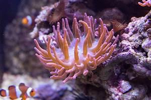 Ich Wohne In : ich wohne in einer ano ani anomene h anemone foto ~ Lizthompson.info Haus und Dekorationen