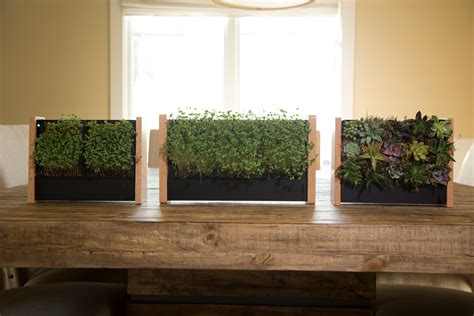 easy   vertical garden ecoqube frame  growing