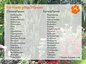 Schneckenkorn Giftig Für Hunde : giftig f r den hund hunde ~ Lizthompson.info Haus und Dekorationen