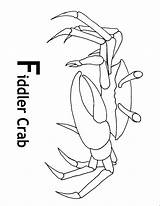 Crab Coloring Fiddler Ghost Printable Crabs Animals Animal Sheet Crayon Designlooter Sanibel Creatures 825px 9kb Town sketch template