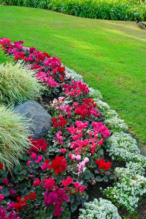 flower beds design flower bed border ideas alyssum begonia and ornamental grass great color combination