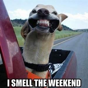 happy friday meme that will make best weekend - Betameme