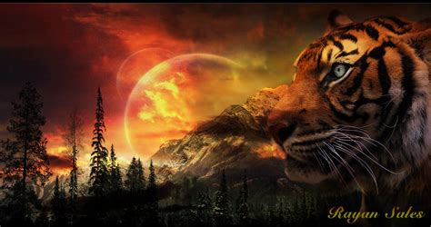 Hdmou Top Some Beautiful Tiger Wallpapers