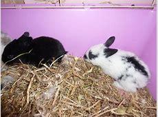 'rabbits' 'bunny' 'rabbits' 'bunnies' 'bunnys' 'cute' 'pet