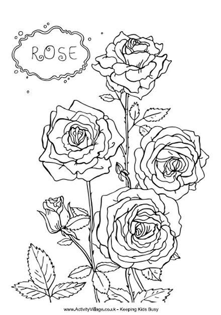 rose colouring page