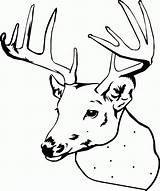 Coloring Elk Printable Deer Head Clipart Bull Reindeer Library Caribou Clip Malvorlagen Reh Kostenlose sketch template
