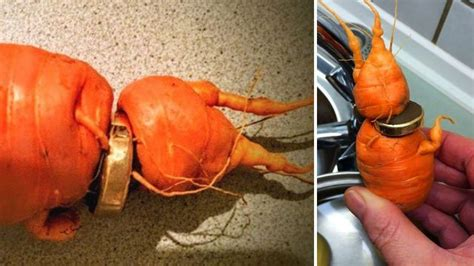 man finds his lost wedding ring growing a carrot in germany metro news