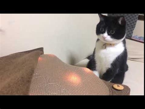 This Cat Just Had His Mind Blown