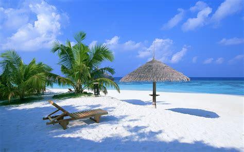 palmen für draußen die 66 besten hintergrundbilder mit der natur dem sommer