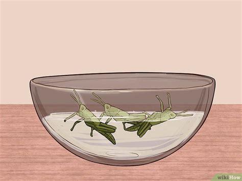 comment cuisiner les tripes comment cuisiner des sauterelles 10 é