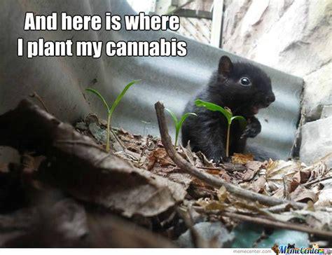 Plant Memes - where i plant my cannabis weed memes